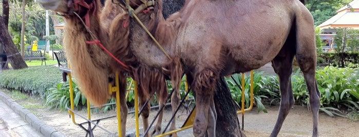 สวนสัตว์ดุสิต (Dusit Zoo) is one of Thailand For Family.