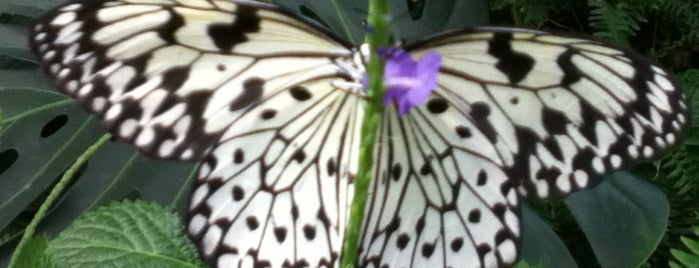 Sertoma Butterfly House & Marine Cove is one of Sioux Falls' Top 50.