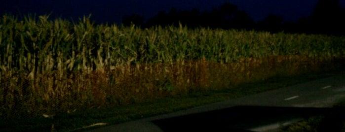 Great Godfrey Corn Maze is one of Sufjan Steven's Illinois.