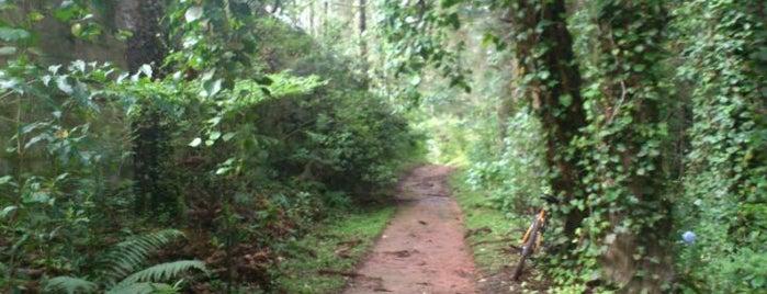 Bosque do Silêncio is one of Campos do Jordão 2012.