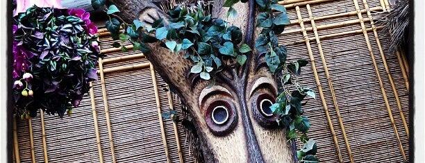Enchanted Tiki Room is one of Disneyland Fun!!!.