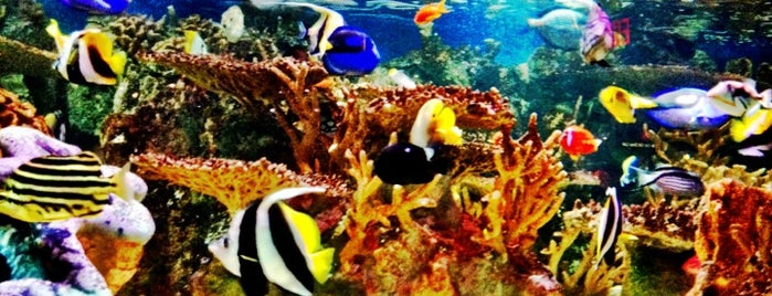 New England Aquarium is one of Attractions to Visit.