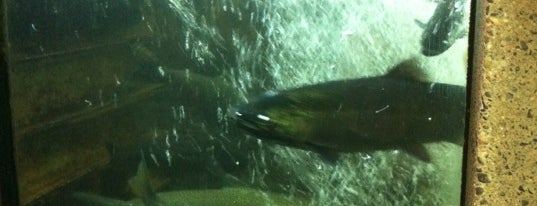 Capilano River Hatchery is one of Favorite Places Around the World.