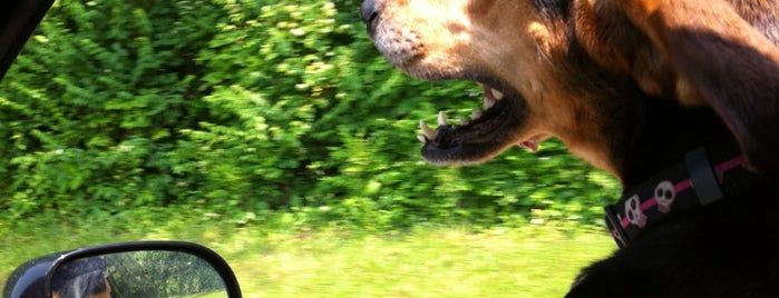 John Rudy County Dog Park is one of Must-visit Great Outdoors in York.