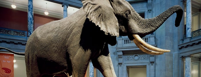 National Museum of Natural History is one of National Mall Tour.