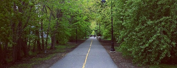 Grove-Cedar Bike Path is one of Nearby Neighborhoods: Davis Square.