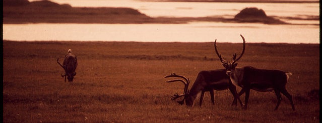 Prudhoe Bay National Forest is one of Documerica.