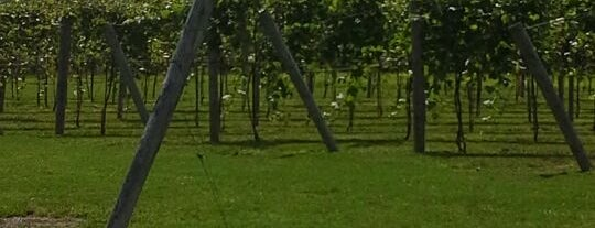 Rushland Ridge Vineyard & Winery is one of Check it out.