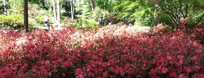 SFA Azalea Trail is one of Best places in Nacogdoches, TX.