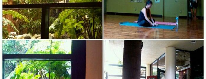 Bryan Kest Power Yoga is one of WERK Out.