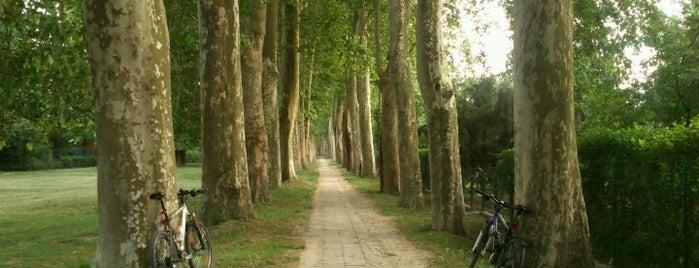 Lupa-sziget is one of kedvenc helyek.