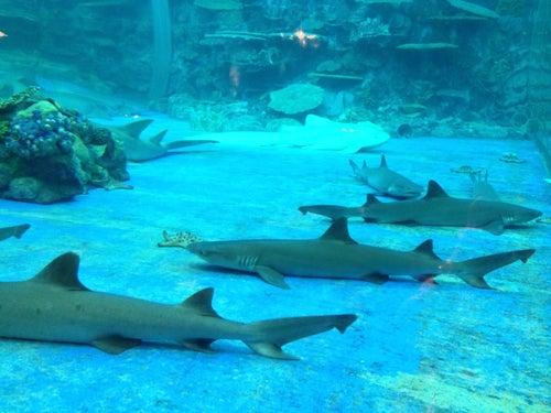 Oceanarium@Oceanpark