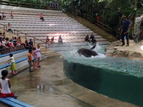 Splash Safari