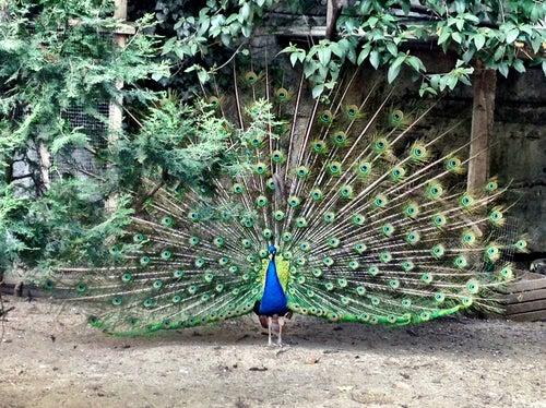 Tbilisi Zoo | თბილისის ზოოპარკი