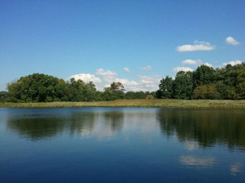 Ned Brown Forest Preserve (Busse Woods)