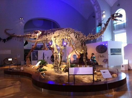 Luonnontieteellinen museo / Natural History Museum