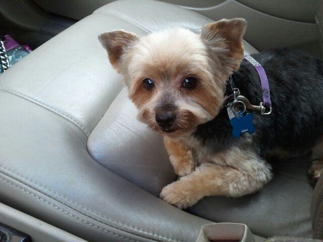 Best Friend Pet Salon,