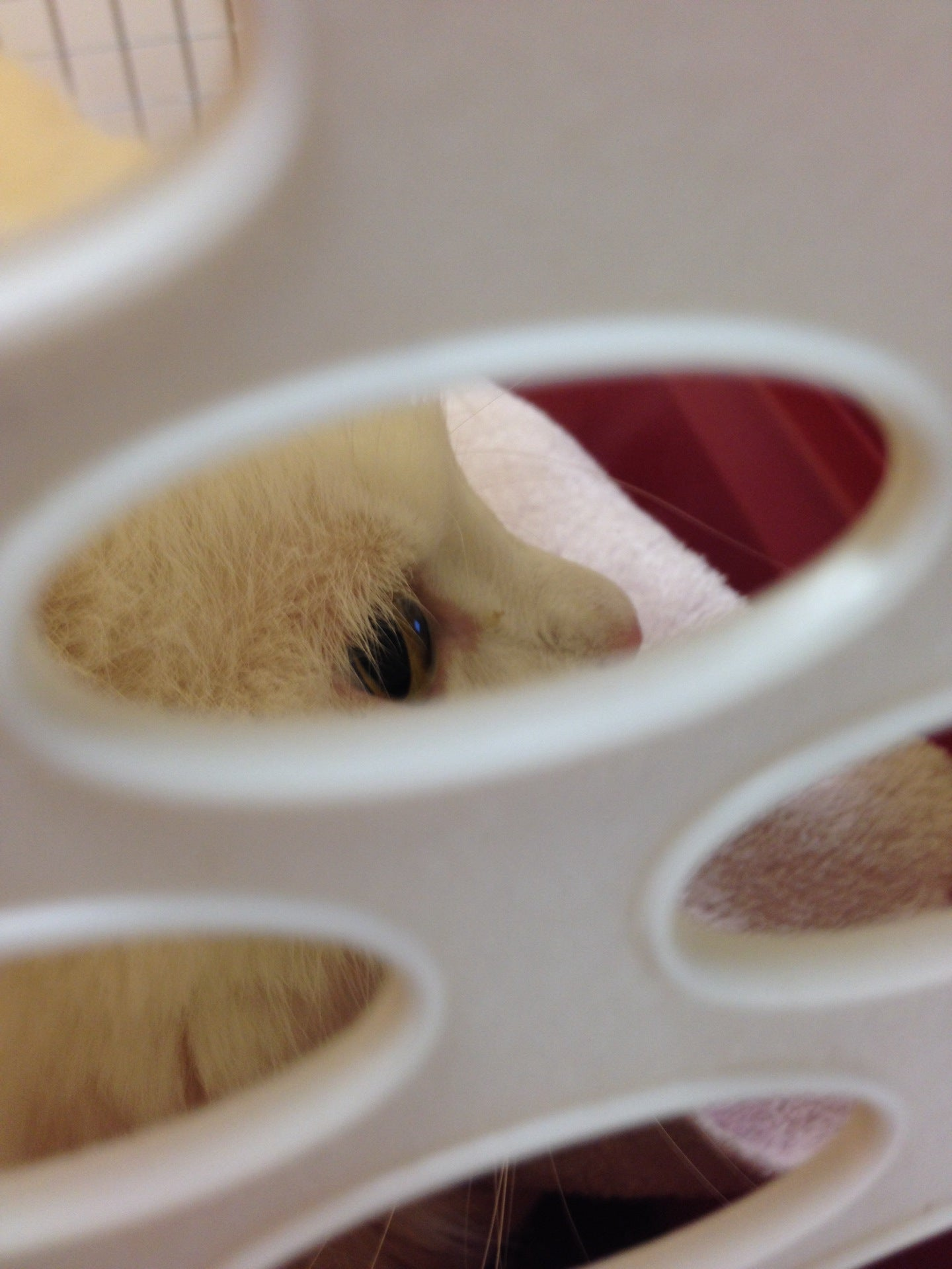 The Pet Hospitals,