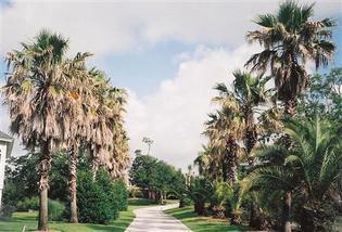 PALMETTO TREE SERVICE,