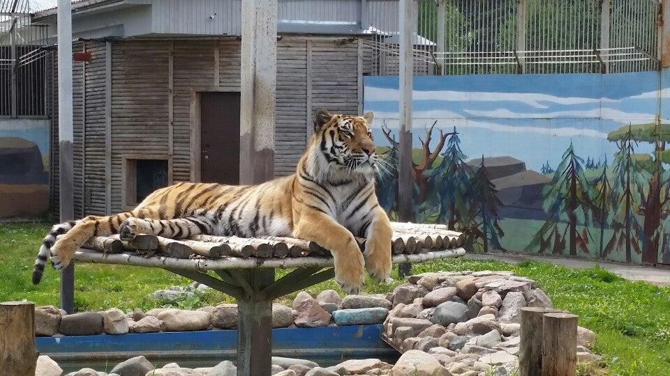 Зоопарк Ярославль