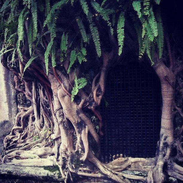 林本源園邸 The Lin Family Mansion and Garden