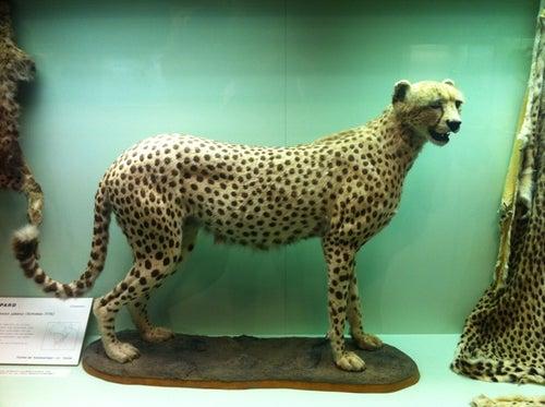 Zoologische Sammlung der Universität