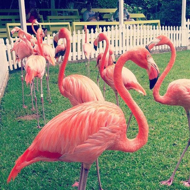 Ardastra Gardens, Zoo & Conservation Center