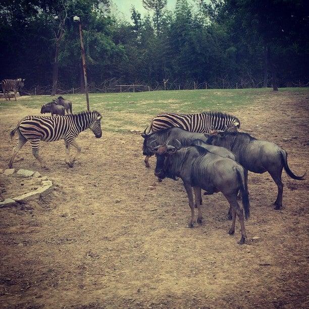 Shanghai Wild Animal Zoo