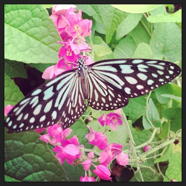 Samui Butterful Garden/insect Museum