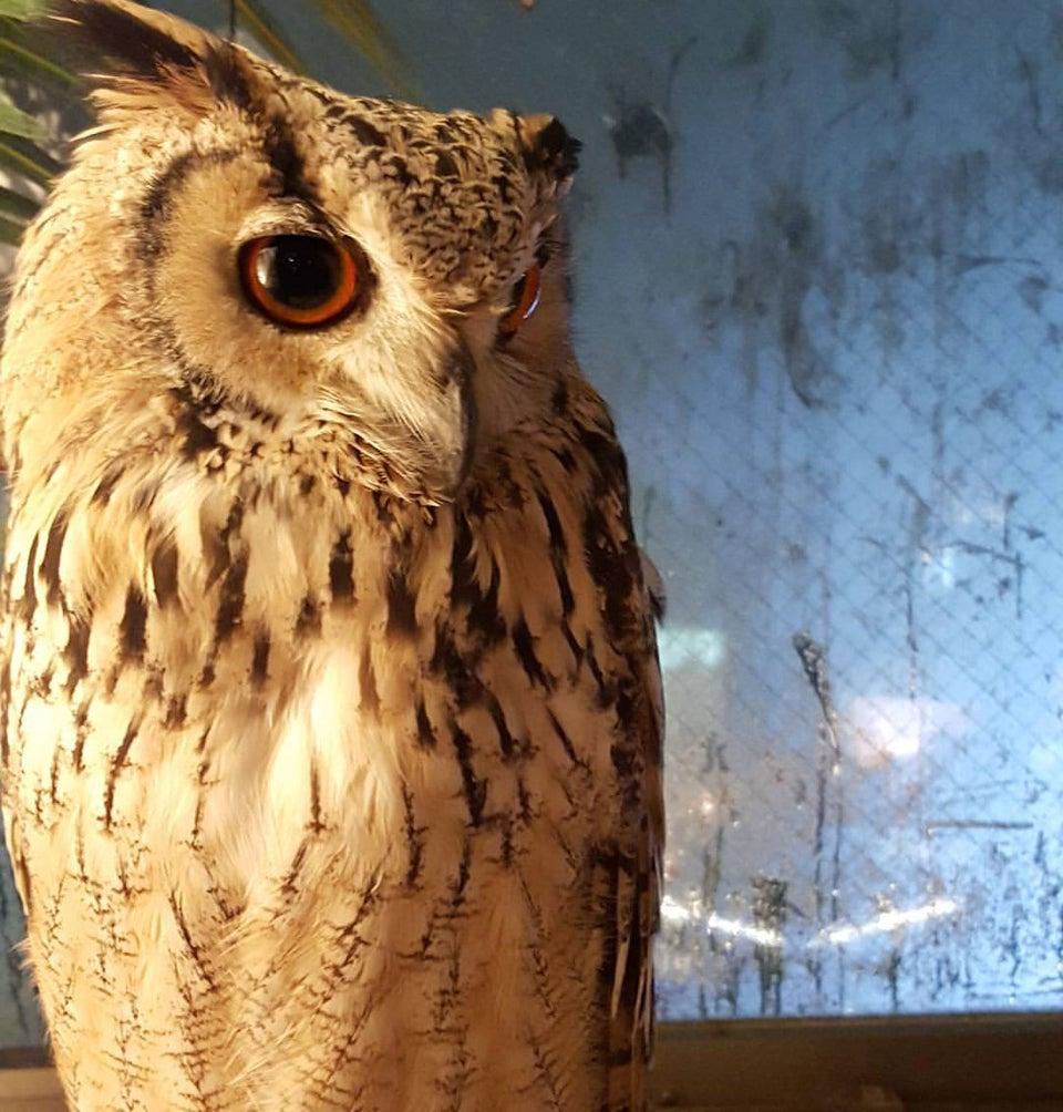 Owl No Mori (Forest of Owl)