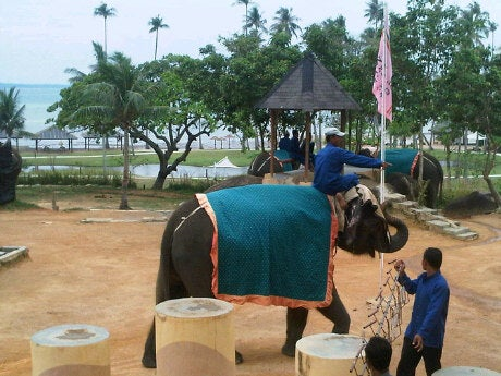 Bintan Elephant Park & Show