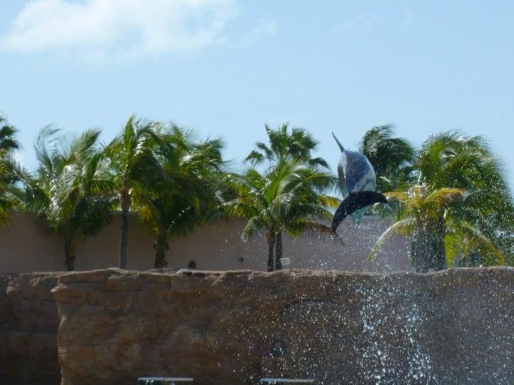 Dolphin Cay At Atlantis