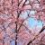 annette-sebes-14096401
