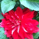 rosemarie-magoo-55937499