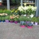jeniffersbloemen-bloemen-40839498