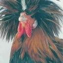 bastiaan-vogels-15612441