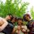 amanda-vissers-14523988