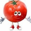 Tomato Ccm