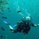 Daum Love Diving