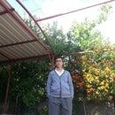 Raufcan Koca