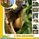 Portal do Araguaia Turismo