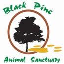 Black Pine Animal Sanctuary