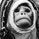 monkey2000