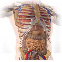 anatomy an-an/ yoga