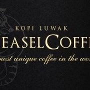 Weasel Coffee Kopi Luwak