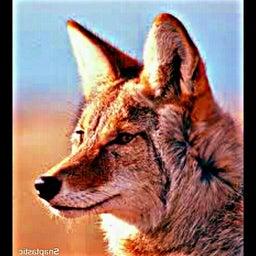 Sean Coyote